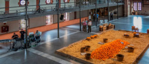 almacen-ribera-carcaixent-naranjas
