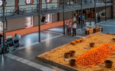 Visita Huerto San Vicente y ruta de la naranja