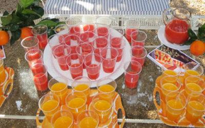 Visita Huerto San Vicente y degustación zumo de naranja