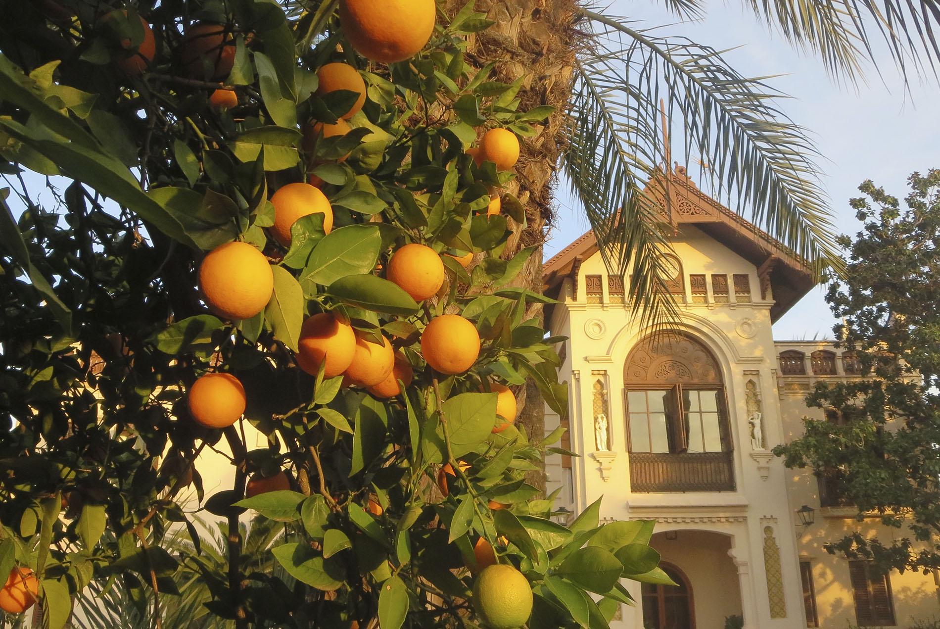comprar-naranjas-online-naranjas-ribera-fotos-antiguas-huerto-san-vicente_0000_HUERTO NARANJAS HORIZONTAL