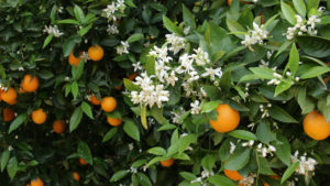 naranjas online de valencia