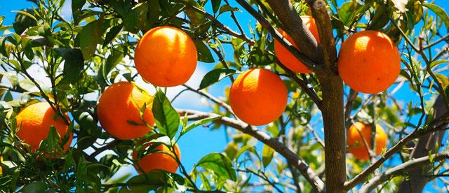 ¡Nueva temporada de naranjas!