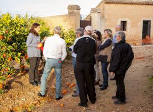 Explicación cultivo de la naranja y otros cítricos
