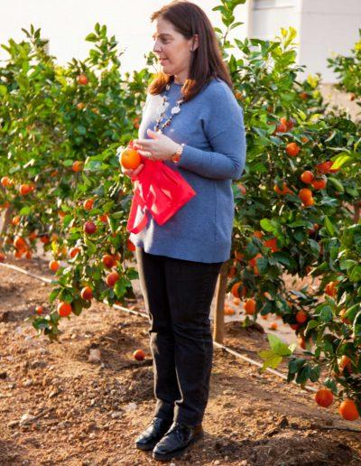 Visitar una finca de naranjos