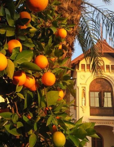 naranjos exteriores huerto ribera