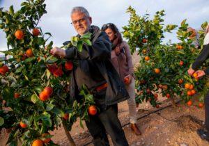 Visitar un huerto de naranjos en carcaixent