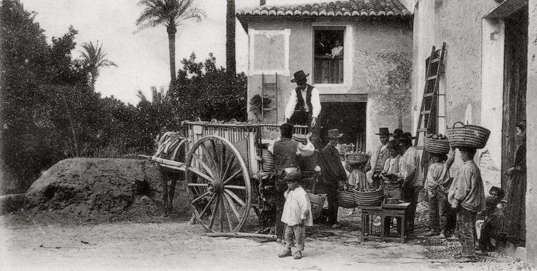 huerto ribera comercializacion naranjas