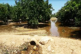riego por inundacion huerto ribera