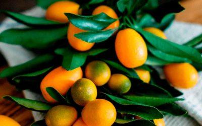 Kumquats y Limequats: Qué son y Cómo Comerlos